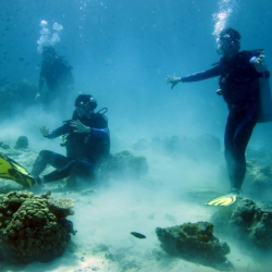 Picture of three scuba divers on the ocean floor.