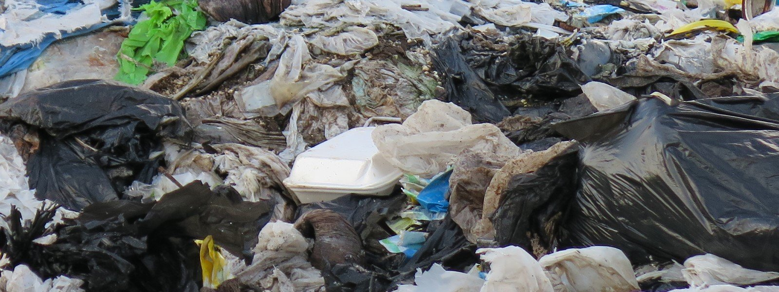 Picture of trash collected from a beach clean-up.