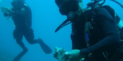 Citizen Science: How you can help protect the oceans