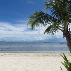 Picture of the ocean and beach in Malapascua, with a palm tree in the foreground.