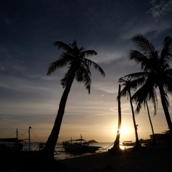 Picture of palm trees and a sunset on the beach in Malapascua.