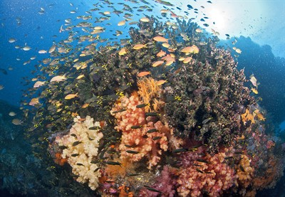 Picture of a colourful coral reef surrounded by shoals of fish.