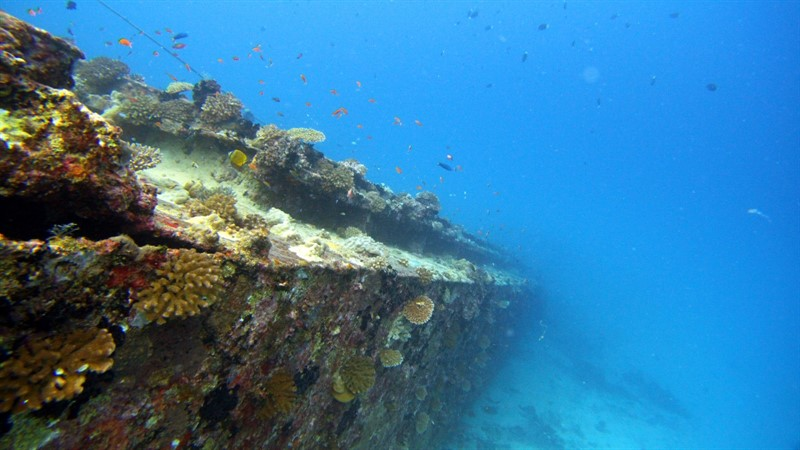 Picture of a coral reef.