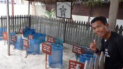 Picture of a person giving a thumbs up. They are standing in front of a turtle protection area.