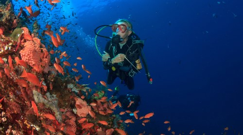 Picture of a diver in the ocean next to a coral reef with lots of fish.