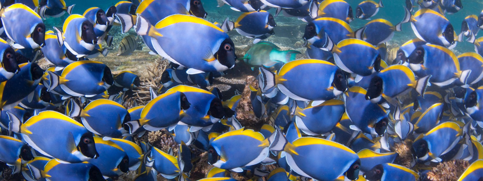 Picture of a shoal of tropical fish.