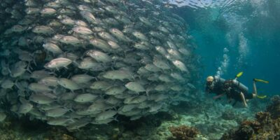 Green Fins dive operator wins global diving award