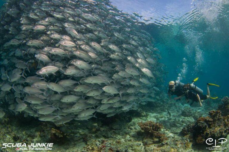 Divers underwater at Pulau Sipadan (Photo credit: Christian Loader)