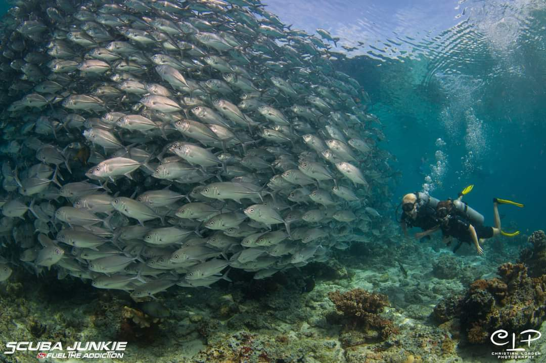 Divers underwater at Pulau Sipadan (Photo credit: Christian Loader)