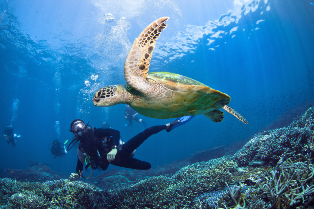 A Scuba Junkie dive guide under water with his guests watching a turtle (Photo credit: Scuba Junkie)