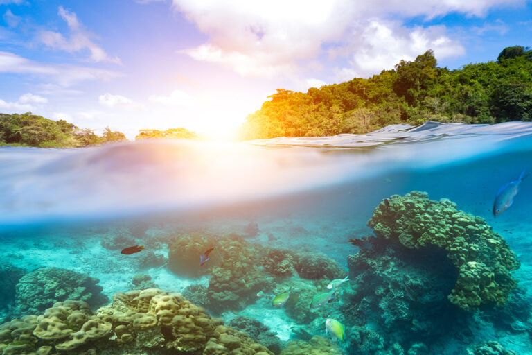 A Dive Pro's Guide To Sunscreen & Coral Reefs