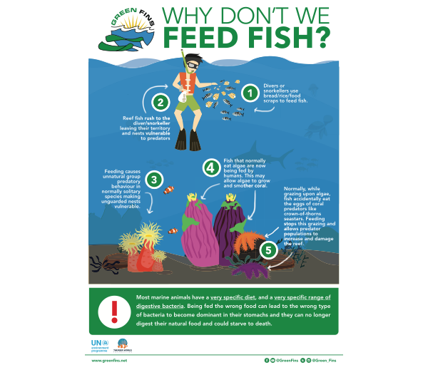 Why we don't Feed Fish Infographic