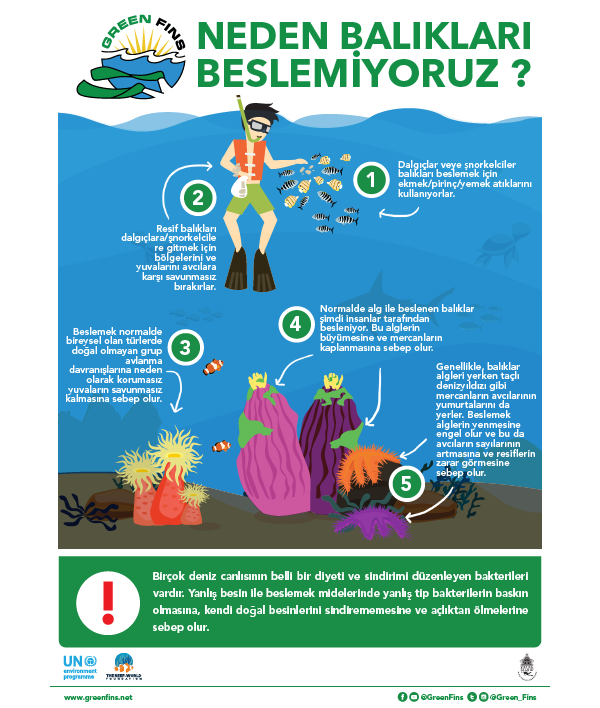 Why we don't Feed Fish Infographic (Turkish - Türk)